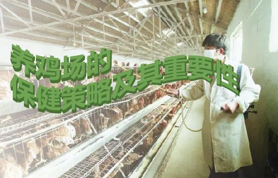 养鸡场的保健策略及其重要性